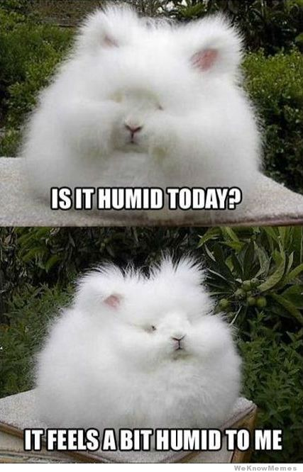 is-it-humid-today
