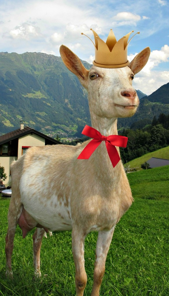 goat-in-austria-198455_1920